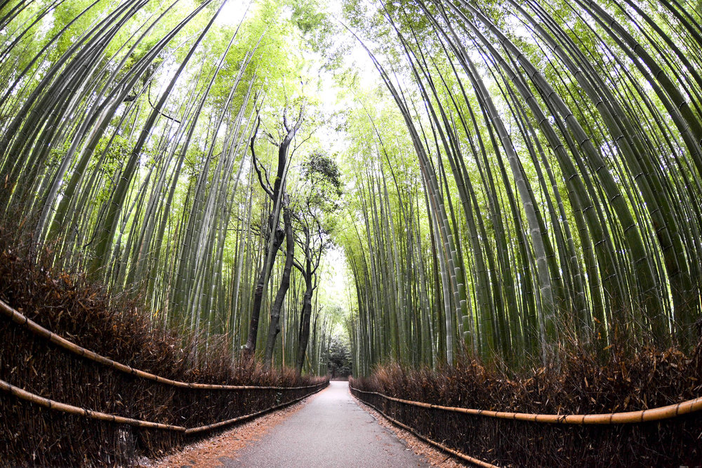 Arashiyama bamboo grove [ BUY GLASS PRINT ]