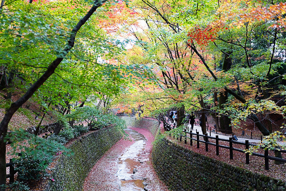 Fall leaves around Kitano tenmangu shrine in Kyoto