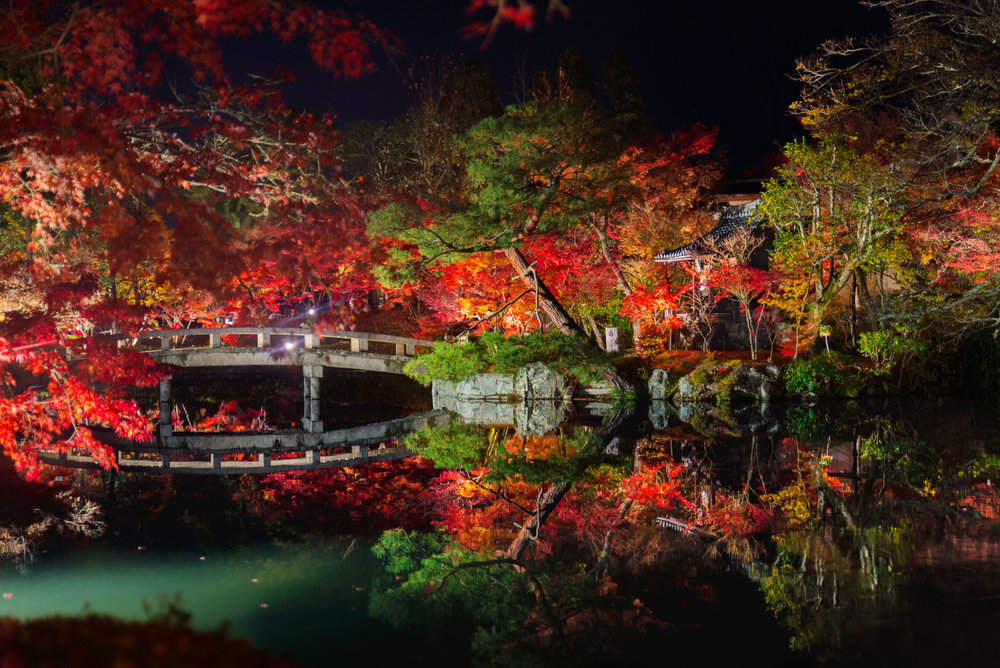 Fall leaves at Eikan-do Zenrin-ji at night