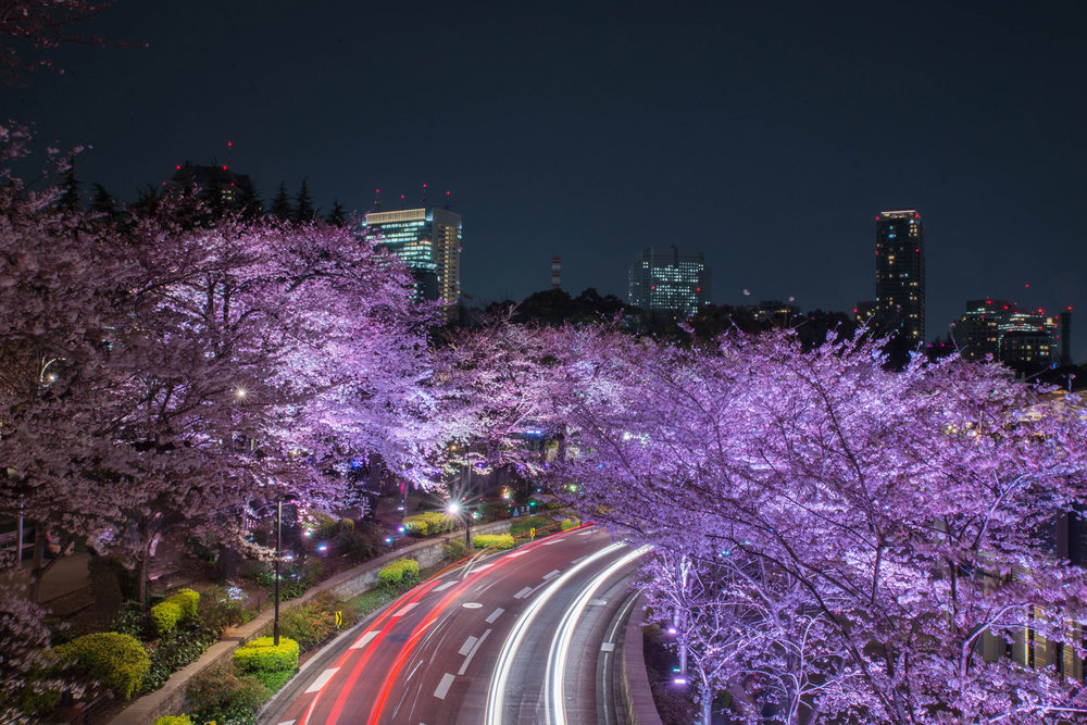 Cars leave light trails under illuminated cherry blossoms at Tokyo Midtown in Roppongi.