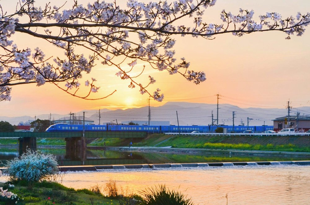 A Sonic Express train passes over the Imagawa river in Yukuhashi during cherry blossom season