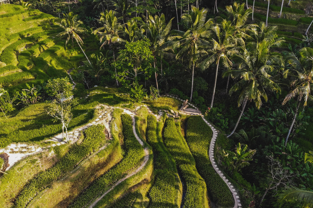 An aerial photo of Tegalalang rice terrace in Bali