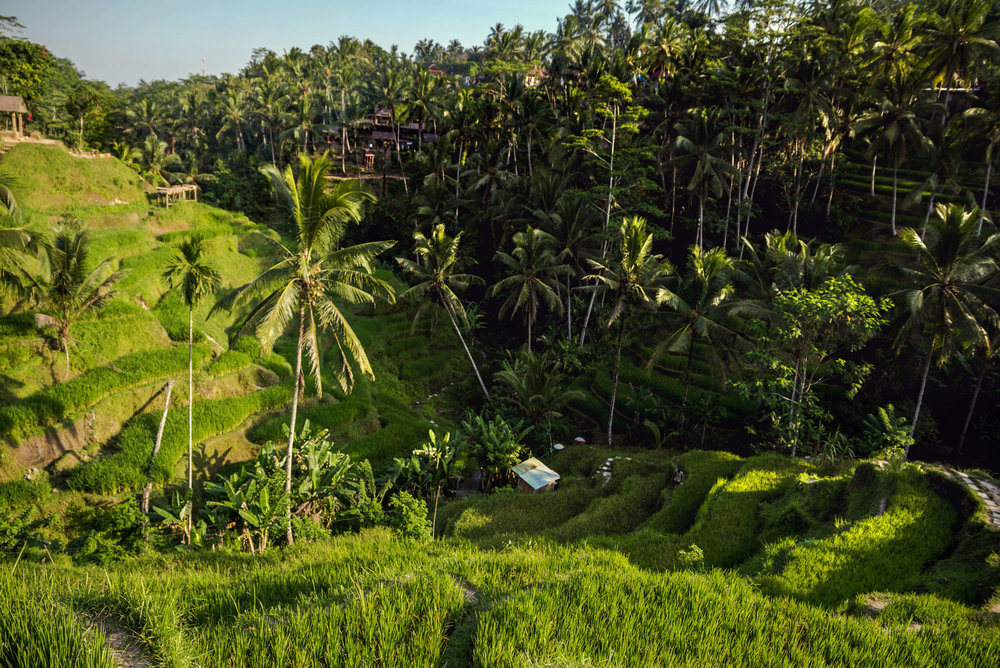 Tegalalang rice terrace in Ubud, Bali