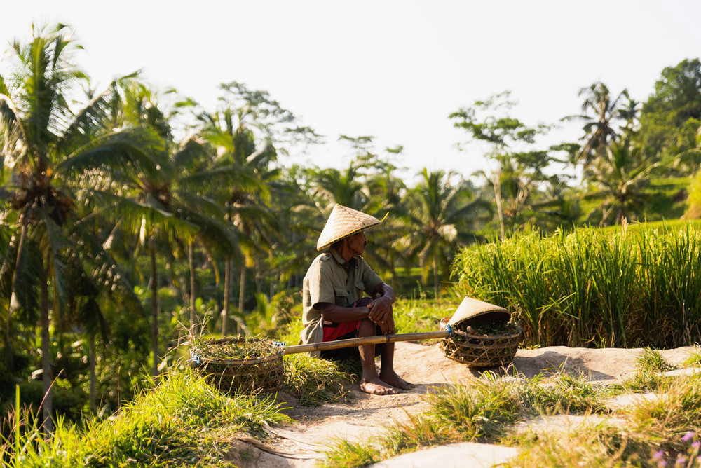 A rice field worker sits at the Tegalalang rice terraces in Ubud, Bali