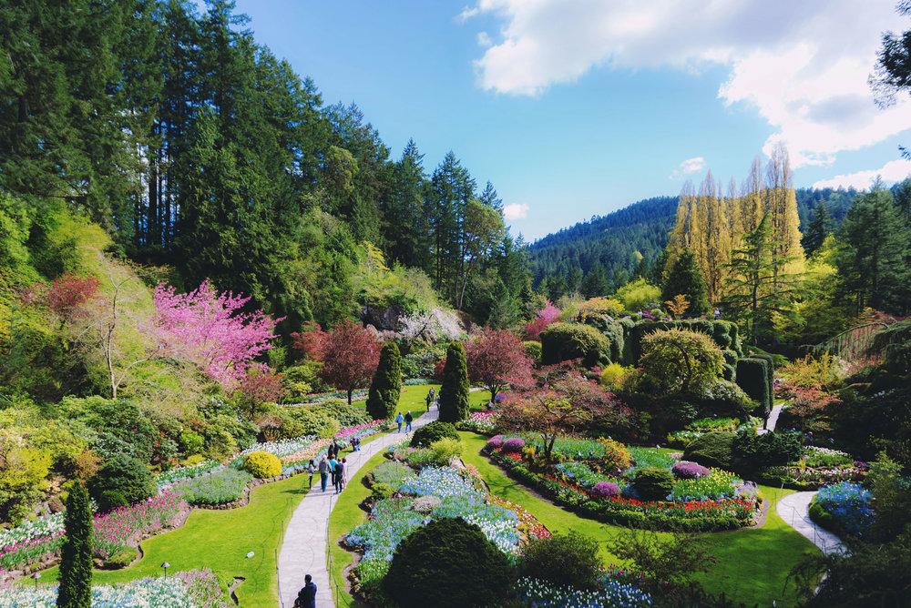 Buchart Gardens was the main destination in Victoria
