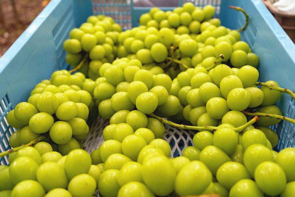 yamanashi-grapes-03.jpg