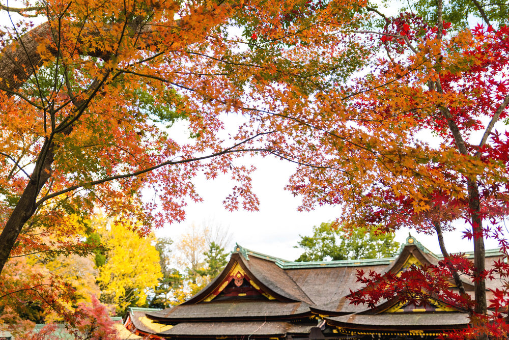 Fall leaves at Kitano Tenmangu in Kyoto