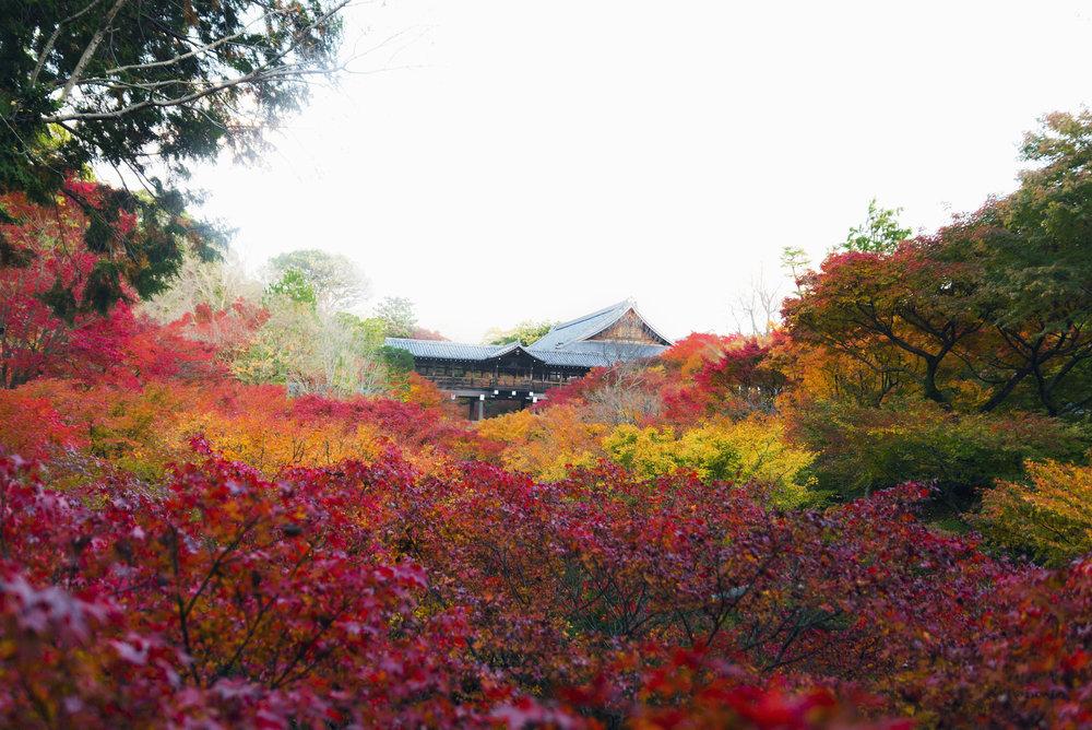 The fall leaves near Tsutenkyo Bridge at Tokufu-ji in Kyoto