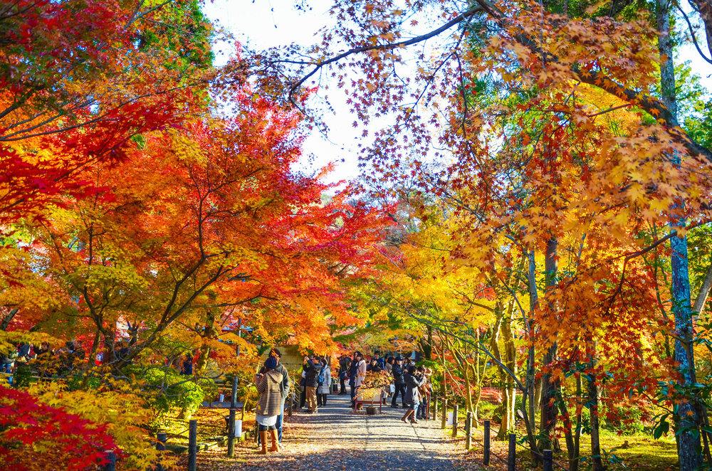 Fall leaves at Eikan-do Zenrin-ji