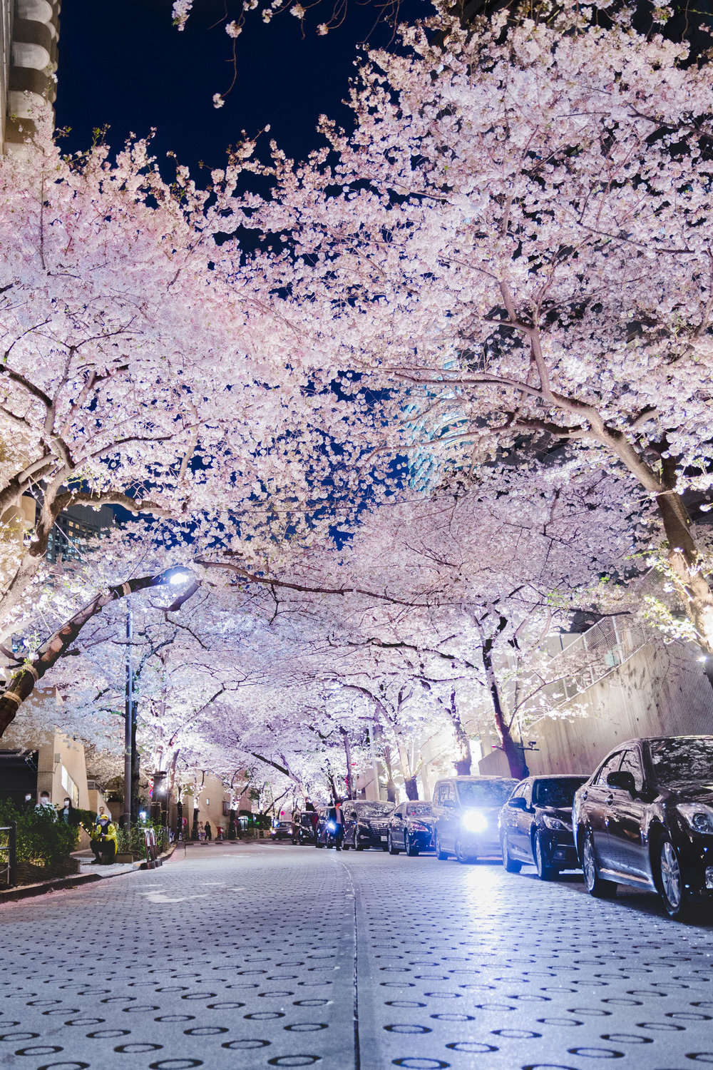 Illuminated cherry blossoms over a street at Ark Hills