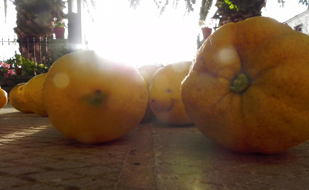 Methoni lemons
