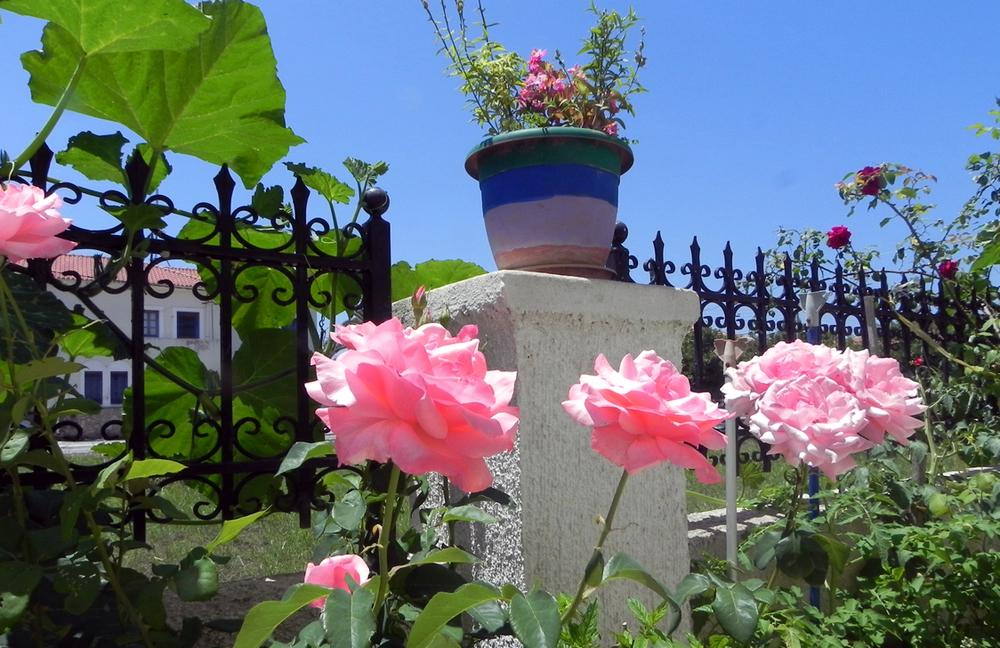 flowers low.jpg