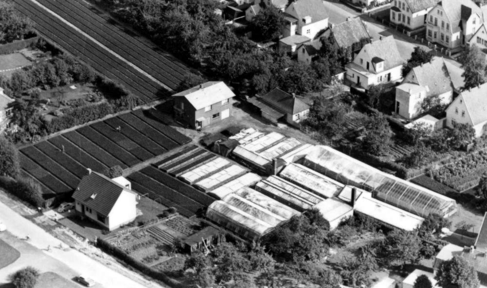 Luftaufnahme der Gärtnerei in den 50ern.