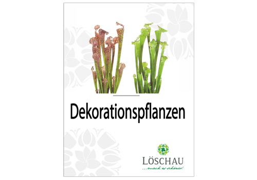 Dekorationspflanzen