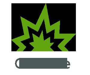 AMS_CreativeTab.png