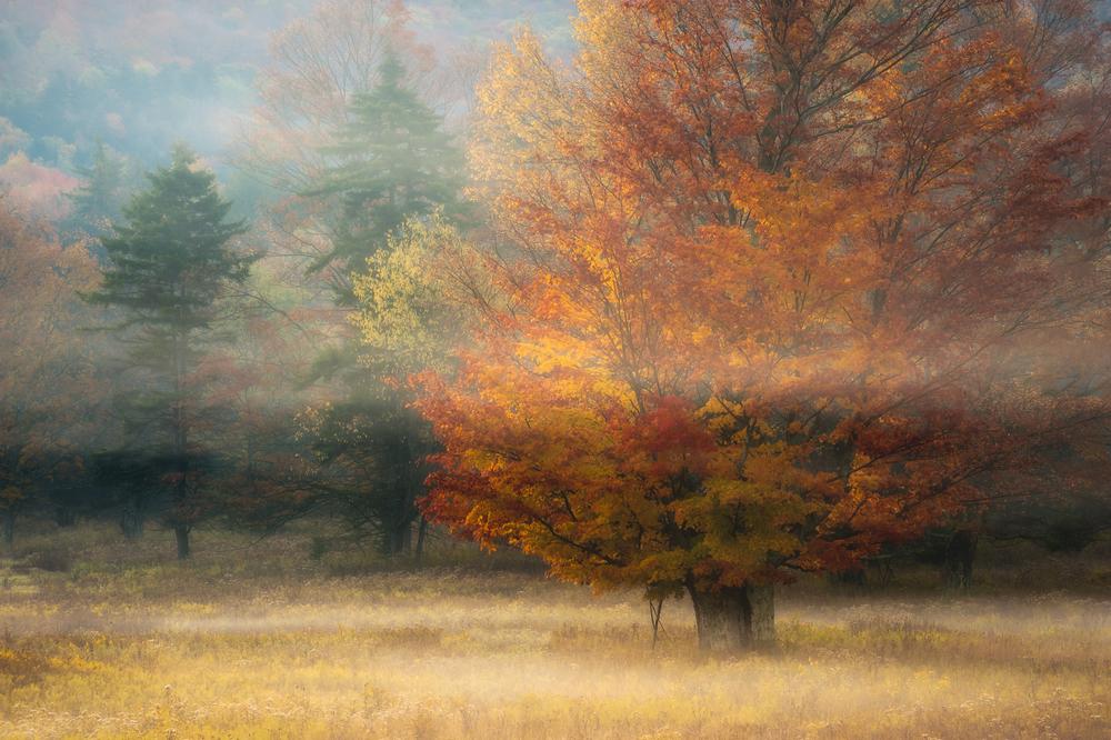 Mystery Meadow.JPG