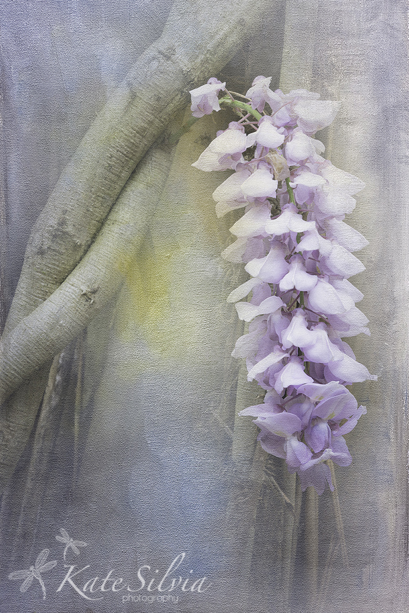 Magnolia+2015+Wisteria+on+a+tree+Tex+FKiss+Artiste+Brest.jpg