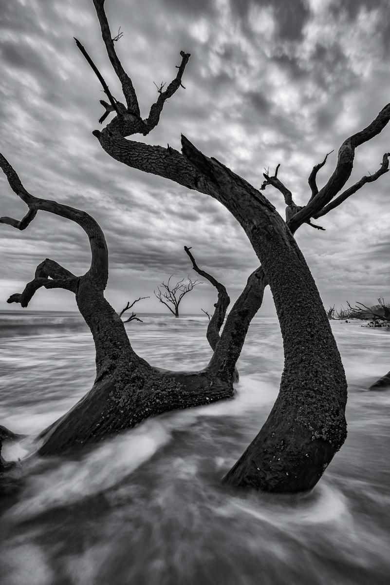 Boneyard Dawn, Edisto Island