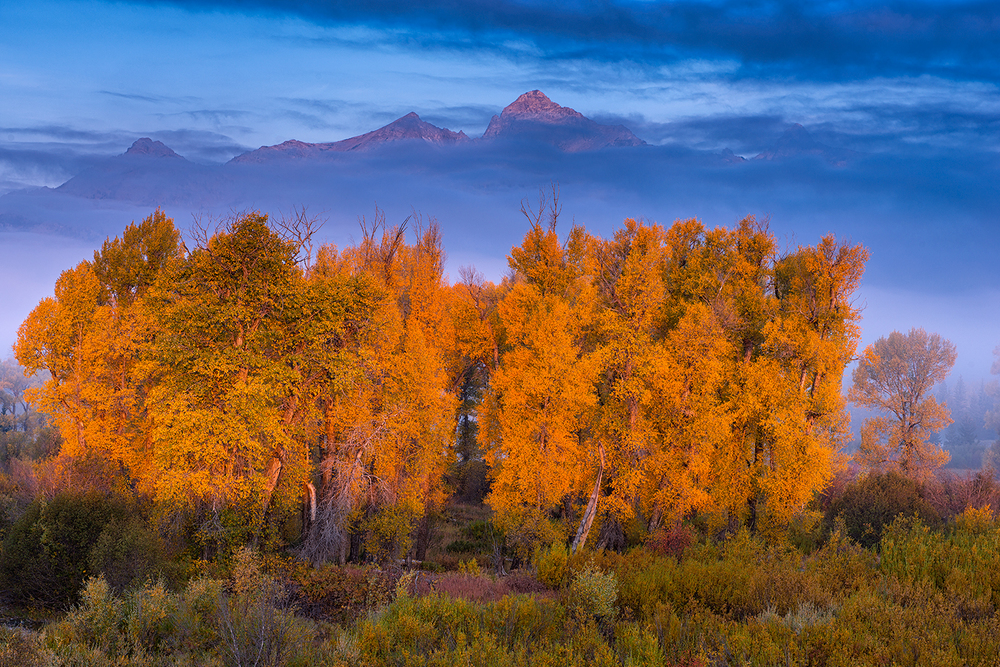 Autumn Cottonwoods & the Teton Range at sunrise.© Joseph Rossbach
