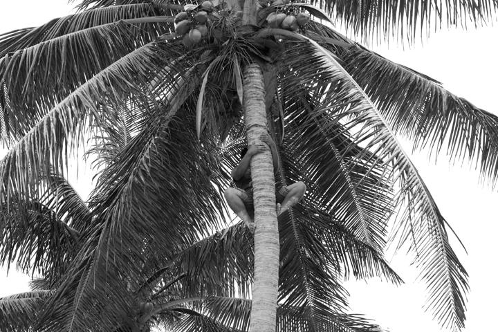 coconut_.jpg