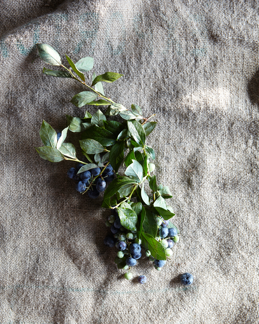 120624_FLYING_FOX_BLUEBERRIES_SM-0246.jpg