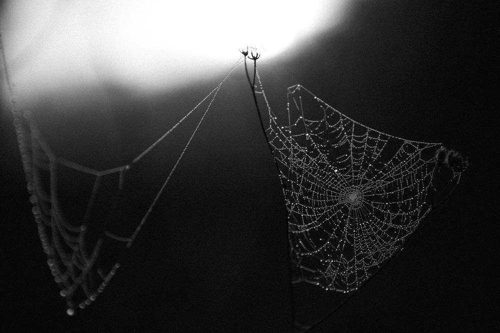 SPIDER_WEB_1_1.jpg