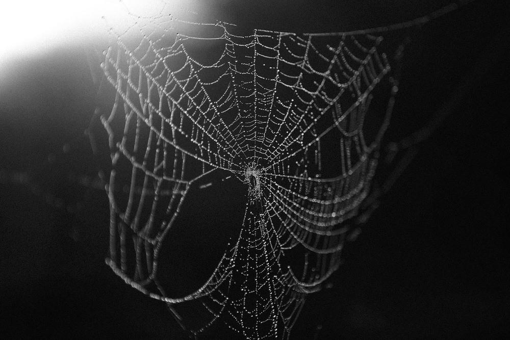 SPIDER_WEB_2_1.jpg