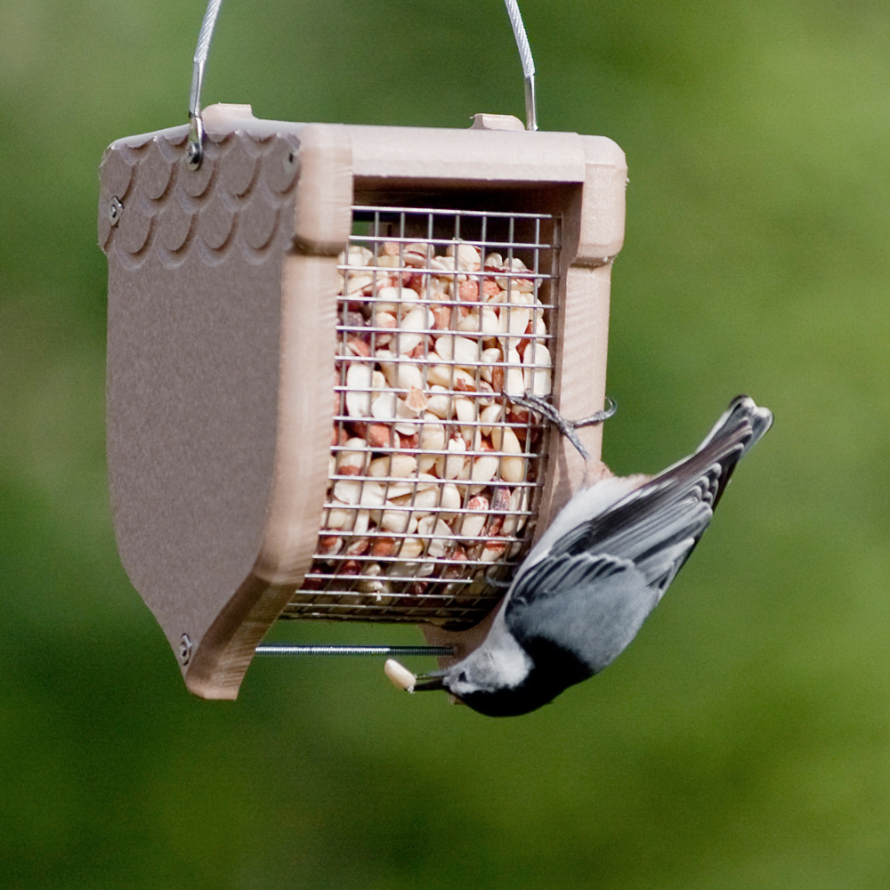 Many species have little or no interest in seeds.  Get the correct feeder for different types of foods.