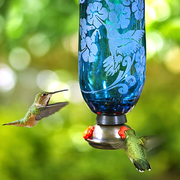 There is a right and wrong way to feed nectar loving birds – their lives may even depend on it.