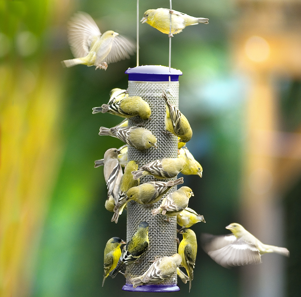 Different styles of seed feeders are designed to attract different species of seed eating birds.