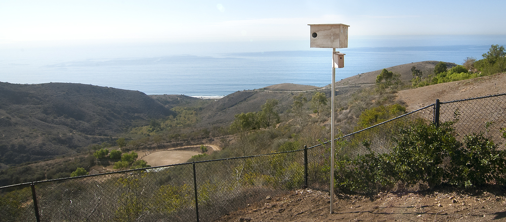 Wild Wings Barn Owl Box with a view - Malibu.