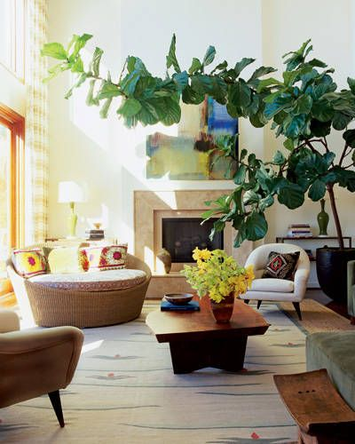 view along the way blog the fiddle leaf fig trick