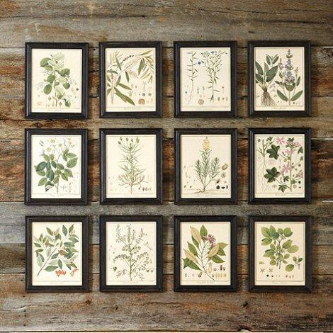 ballard-botanical-prints.jpg