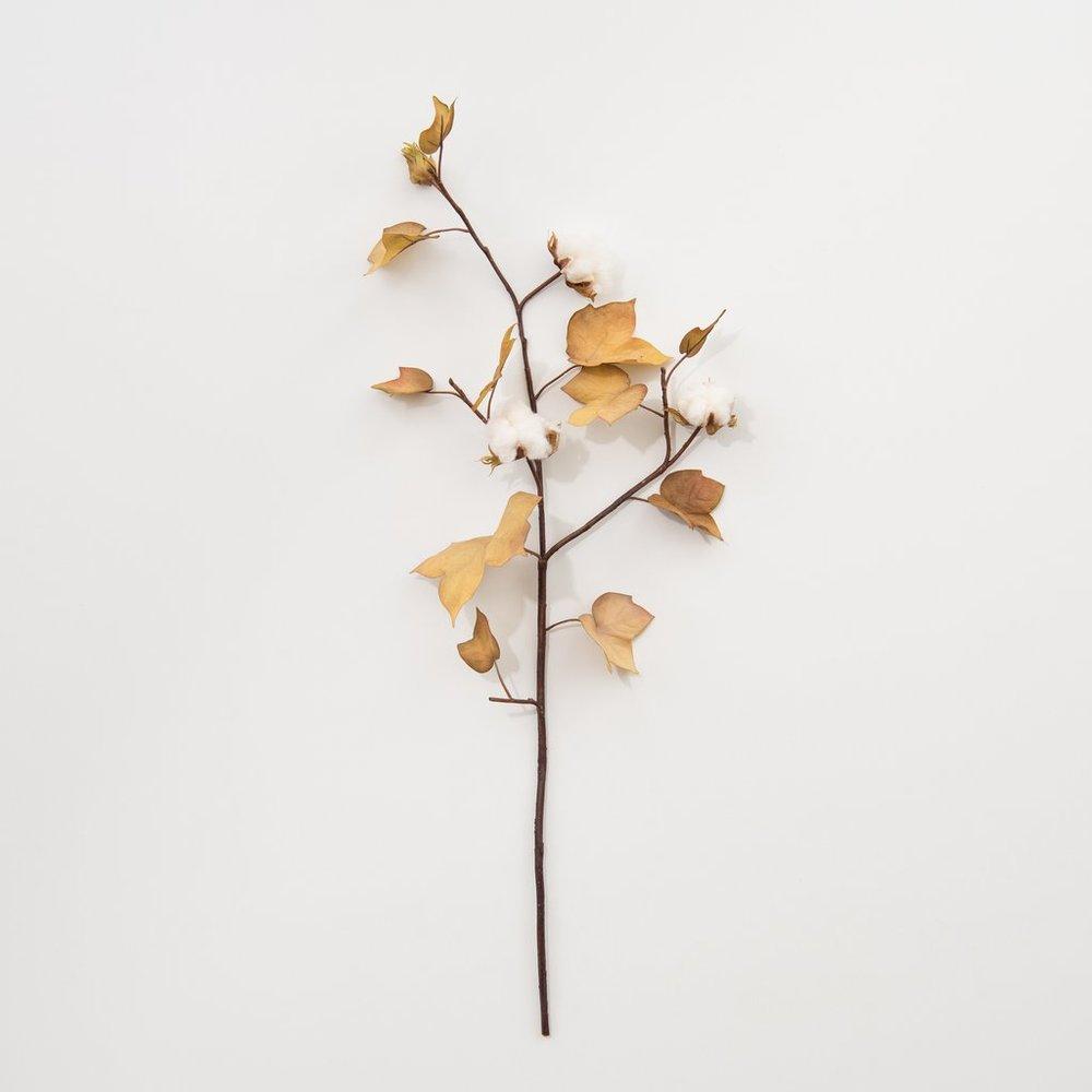 harvest-cotton-stem_1024x1024.jpg