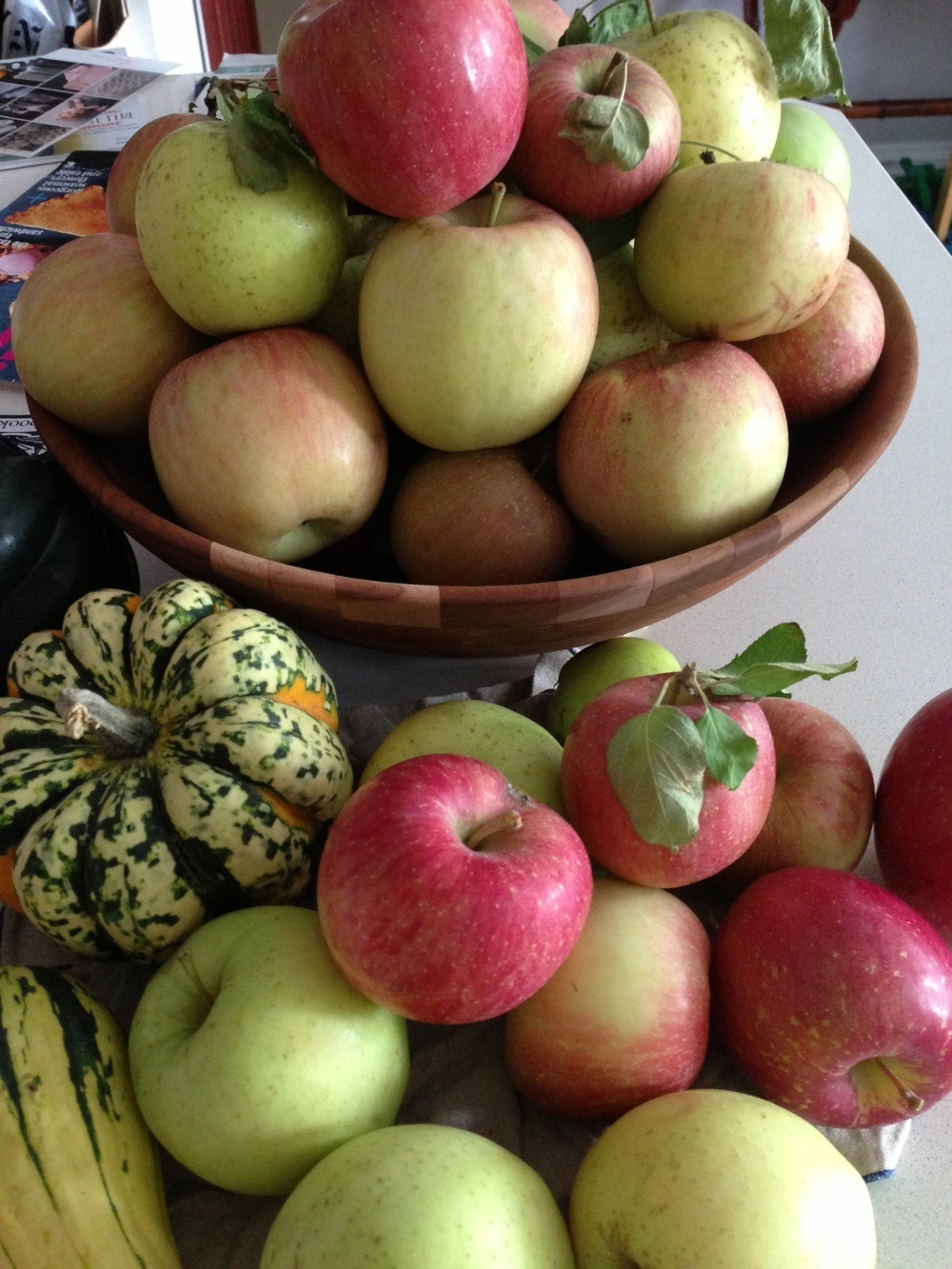 my bounty, apples picked from Stuart's Farm in Granite Springs