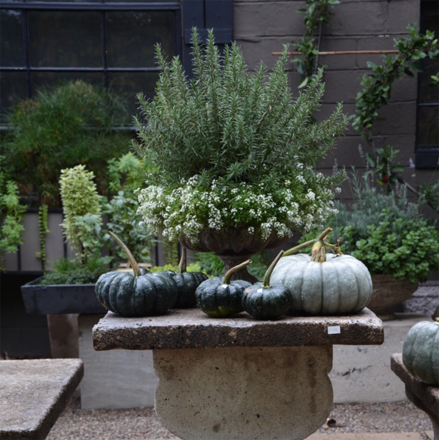 from the blog of  Deborah Silver, Dirt Simple , in this photo in the pot behind looks like rosemary.