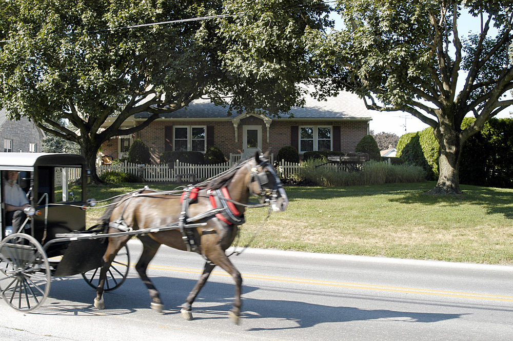 The Amish Guest House