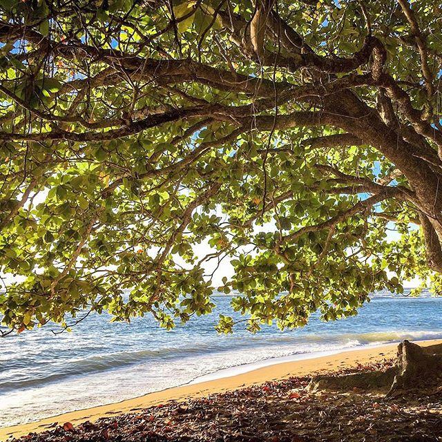 Simply Kauai. #kauai #hawaii #hanalei #aloha #mahalo #paradise