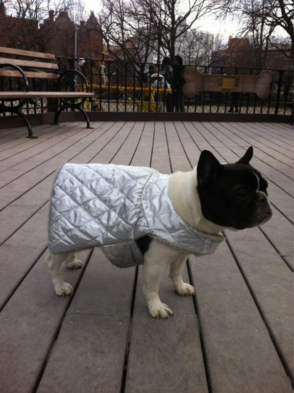 Stinky in her winter wear.