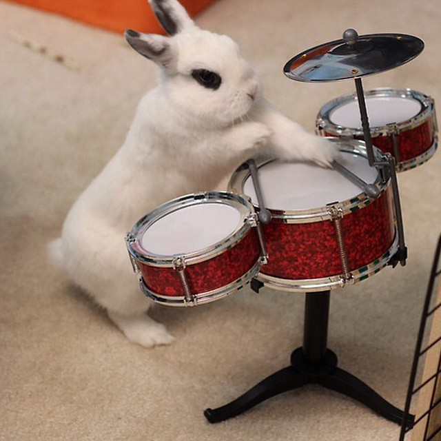 regram @creaturesofcomfort band practice.