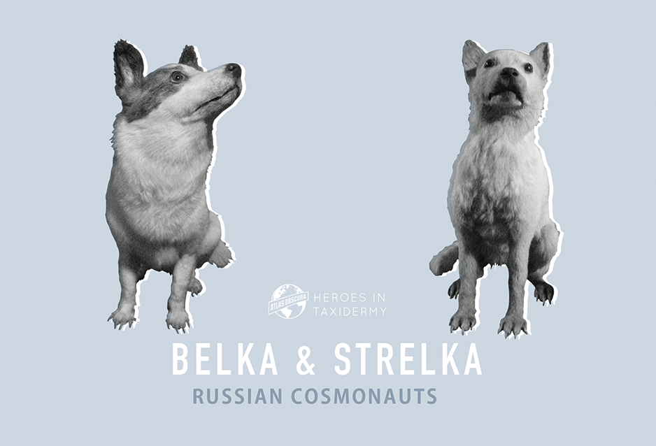 Belka and Strelka, Russian Cosmonauts