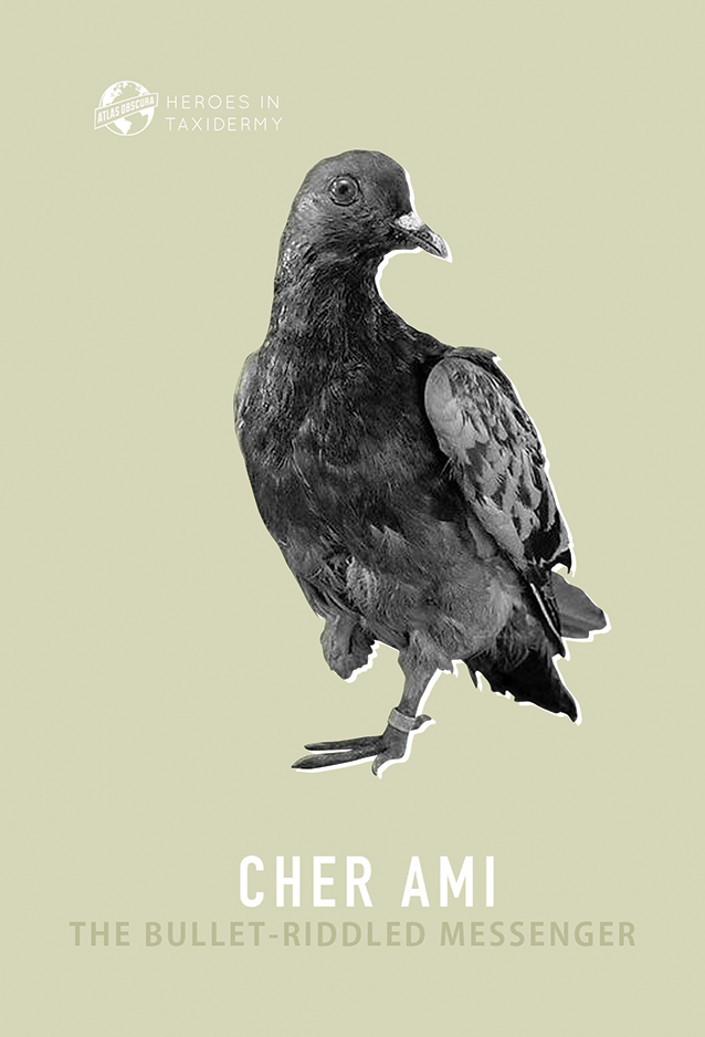 Cher Ami, The Bullet-Riddled Messenger