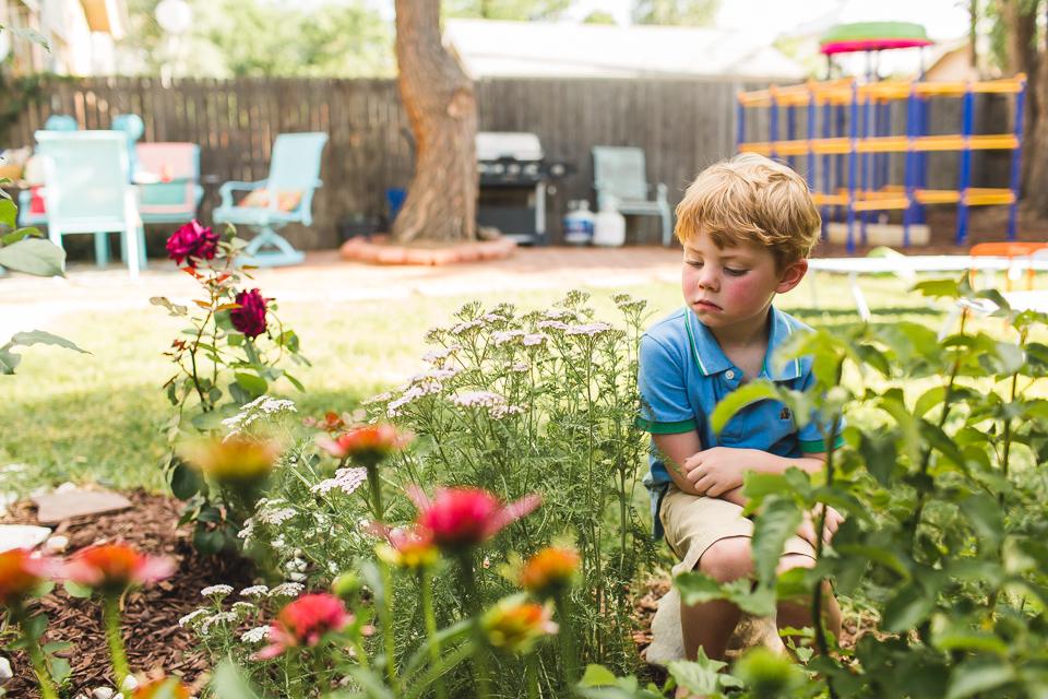 garden little boy denver family photographer