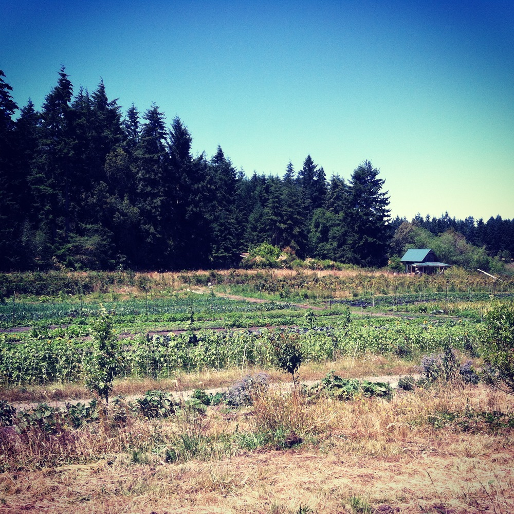 Spring Rain Farm (Port Townsend WA)