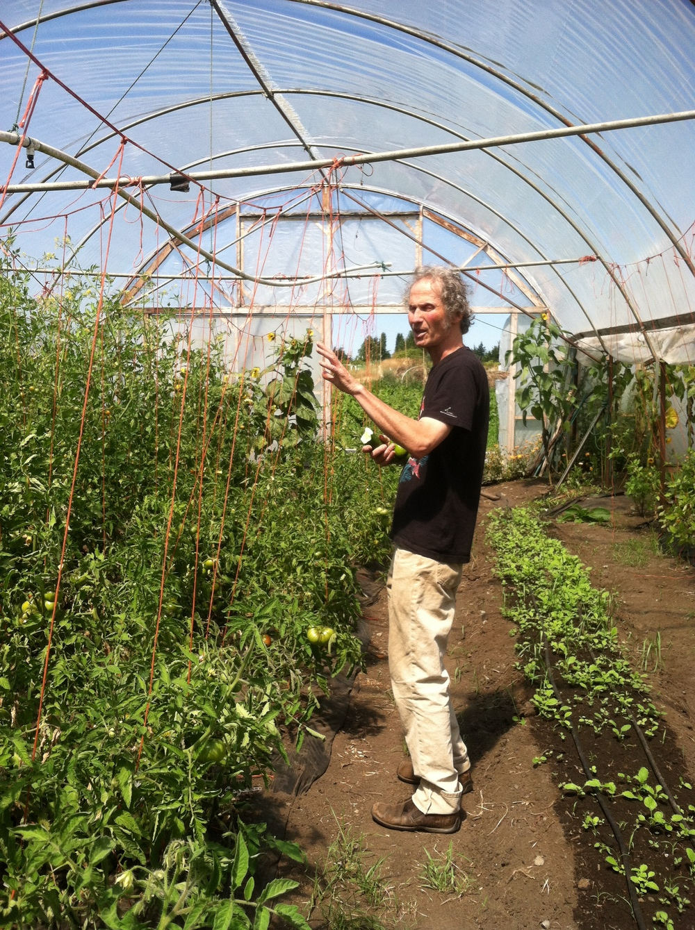Joe Breskin describing the fate of these tomato plants. He designed an incredible greenhouse at Colinwood Farm!