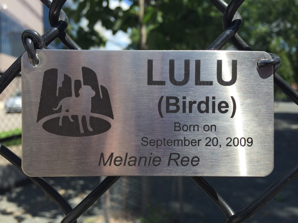 LULU'S (Birdie) Dog Silhouette Stainless Steel Plaque / Gateway Dog Park / Minneapolis, Minnesota / July 22nd, 2015