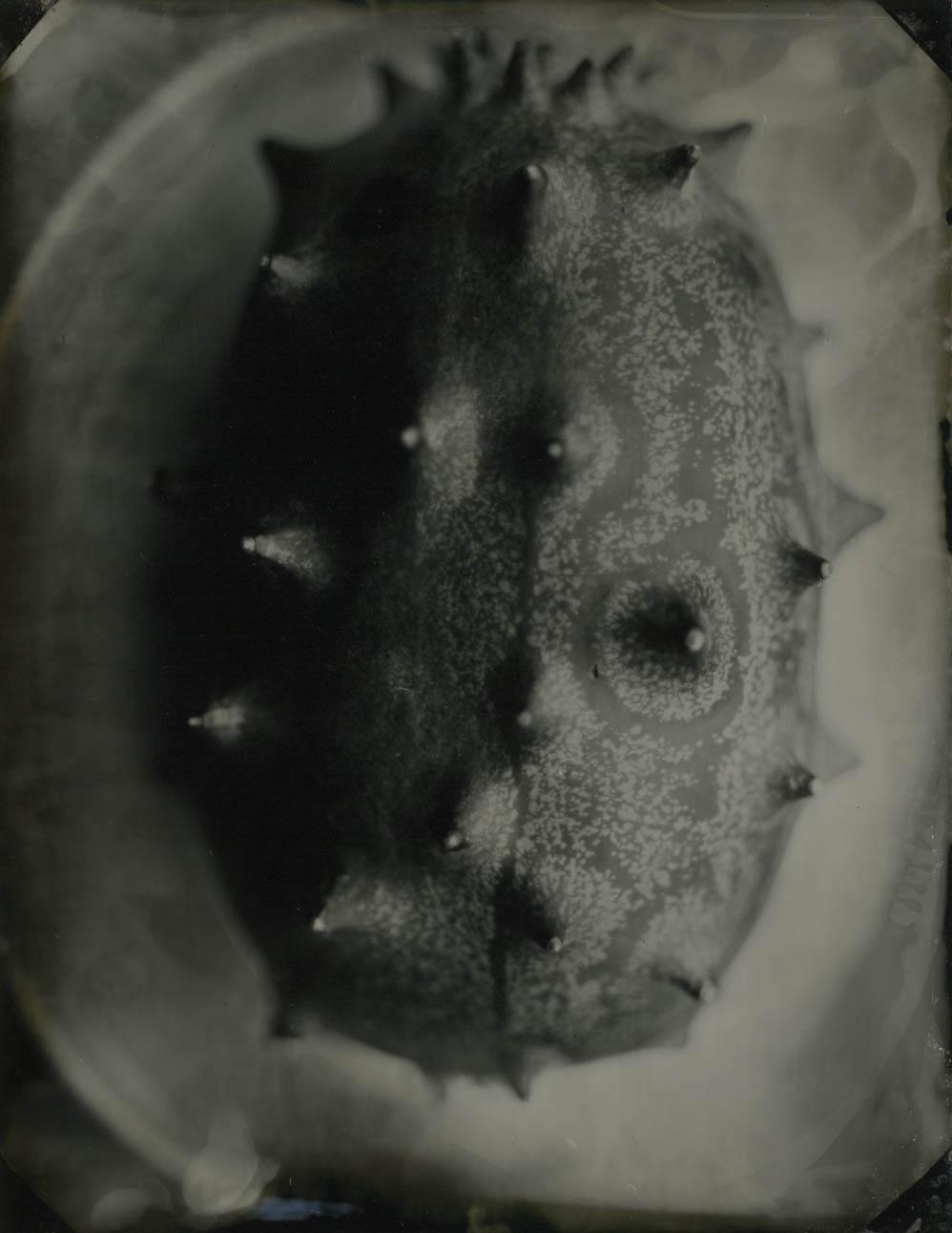 horn melon 1.jpg