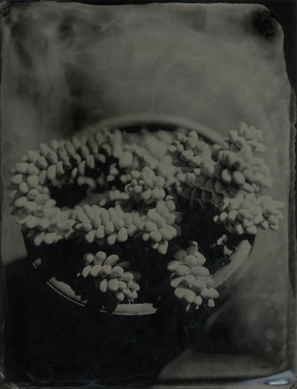 sedem morganianum no 2.jpg