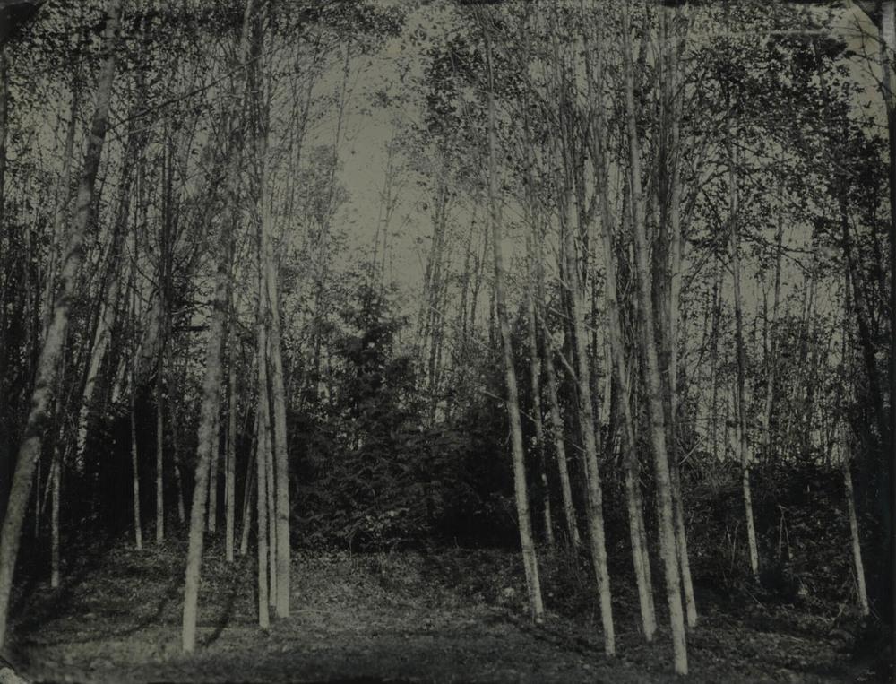 alder grove 3.jpg