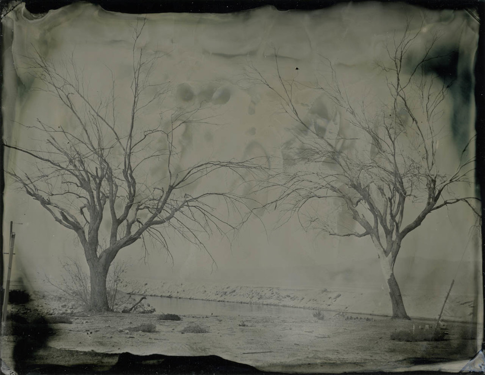 salton sea trees 5366.jpg